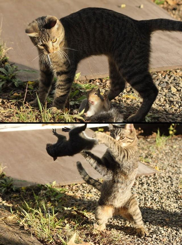 Kitteh Vs Squirrel