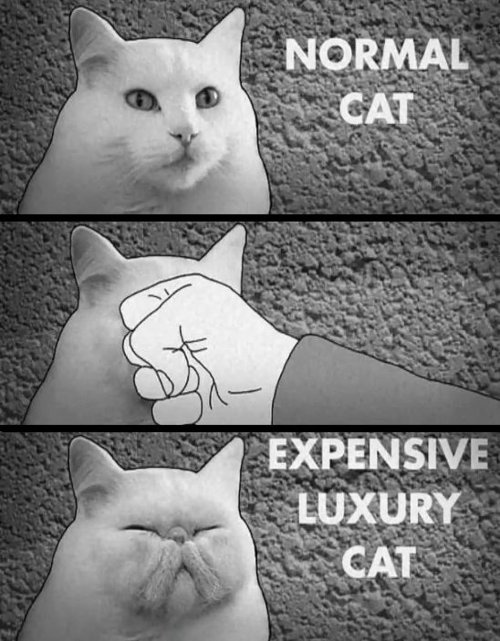 Luxury Cat