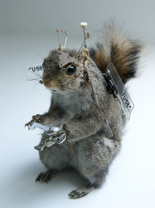 Robosquirrel