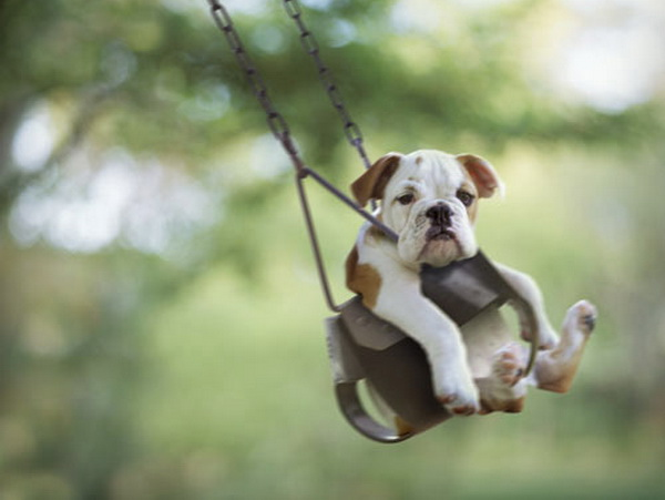 Swinging Bulldog