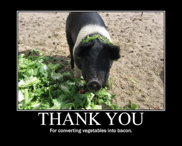 http://www.the-joke-box.com/pictures/turn-vegetables-into-bacon.jpg