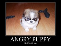Angrypuppy