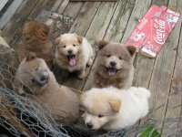 Happy Puppies