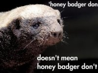 Poor Honey Badger