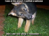 Sniffed A Suitcase