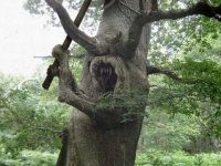 Warrior Tree